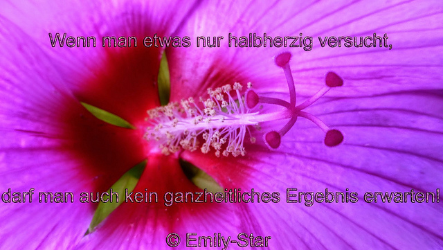 Wenn man etwas nur halbherzig versucht, darf man auch kein ganzheitliches Ergebnis erwarten! © Emily-Star